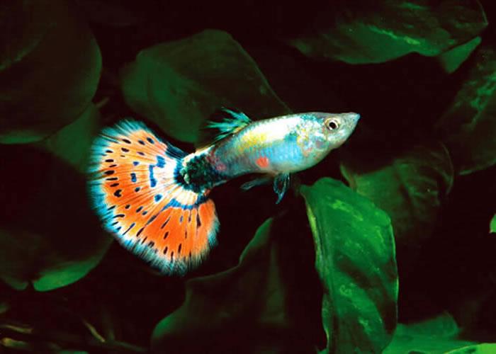 aquarium how to fix tail split